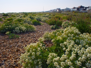 Blooms on the beach