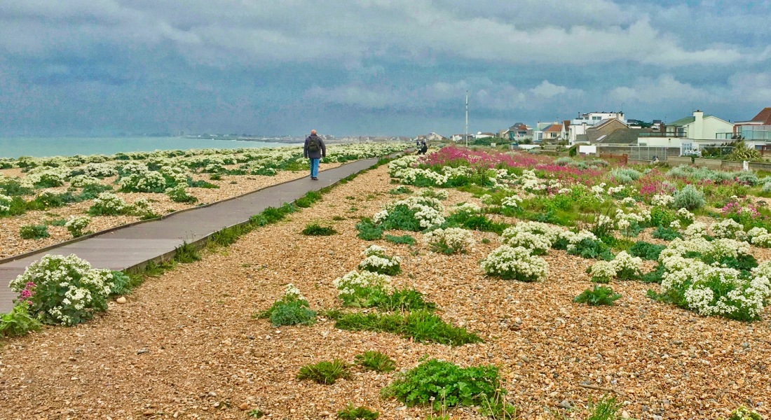 Springtime Shoreham Beach